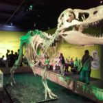 Review Dinosaur Babies, National Museum Cardiff by Eloise Stingemore