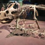 Review Dinosaur Babies exhibition, National Museum, Cardiff by Kate Richards.